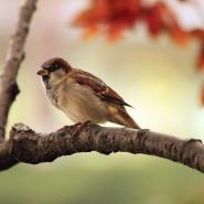sparrow on tree branch